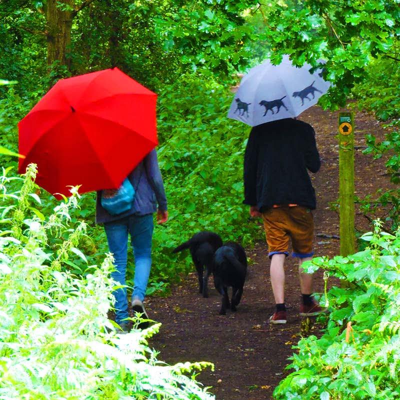 Recycled Umbrella - Eco Windproof Red Golf Umbrella walking the dog
