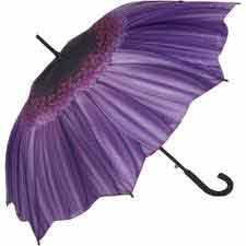 purple daisy open