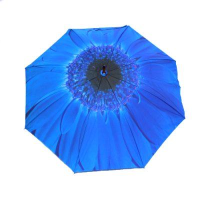 blue flower umbrellas 1