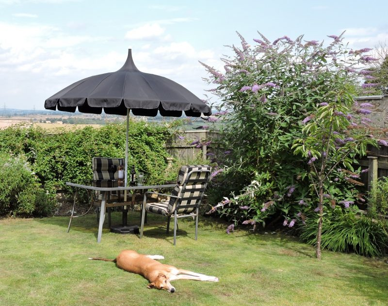All Black Pagoda Patio Umbrella in Debs Garden